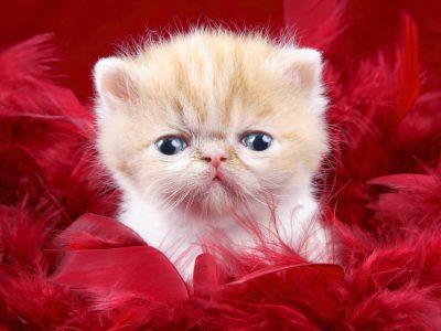 گربه ام گم شده مژدگانی