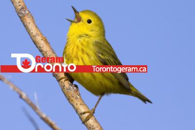 فستیوال آنلاین پرندگان